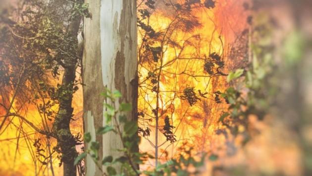 ilcanallarubens_incendio-redimensionadas-NOPARAN-1-816x460