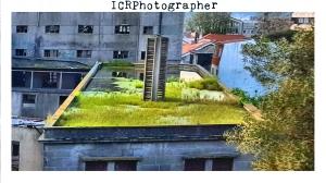 icrphotographer_panificadora_10