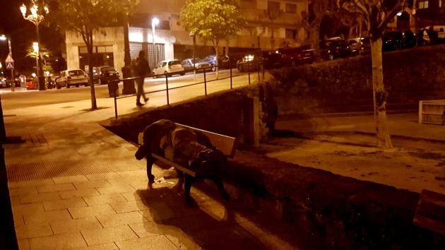 ilcanallarubens_sen-teito_rua-torrecedeira_2016